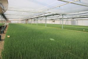Plants minis-mottes